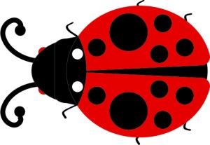 ladybug2_top