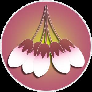 cherrybud